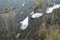 """V nádrži vedle sebe """"žijí"""" labutě a plasty."""
