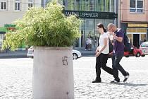 Černá svastika, symbol nacistů, na Mírovém náměstí se vandalovi příliš nevyvedla, policie po něm přesto pátrá.