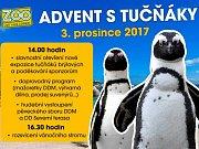 Advent s tučňáky v ústecké zoo.