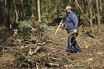 Práce v lese. Ilustrační foto