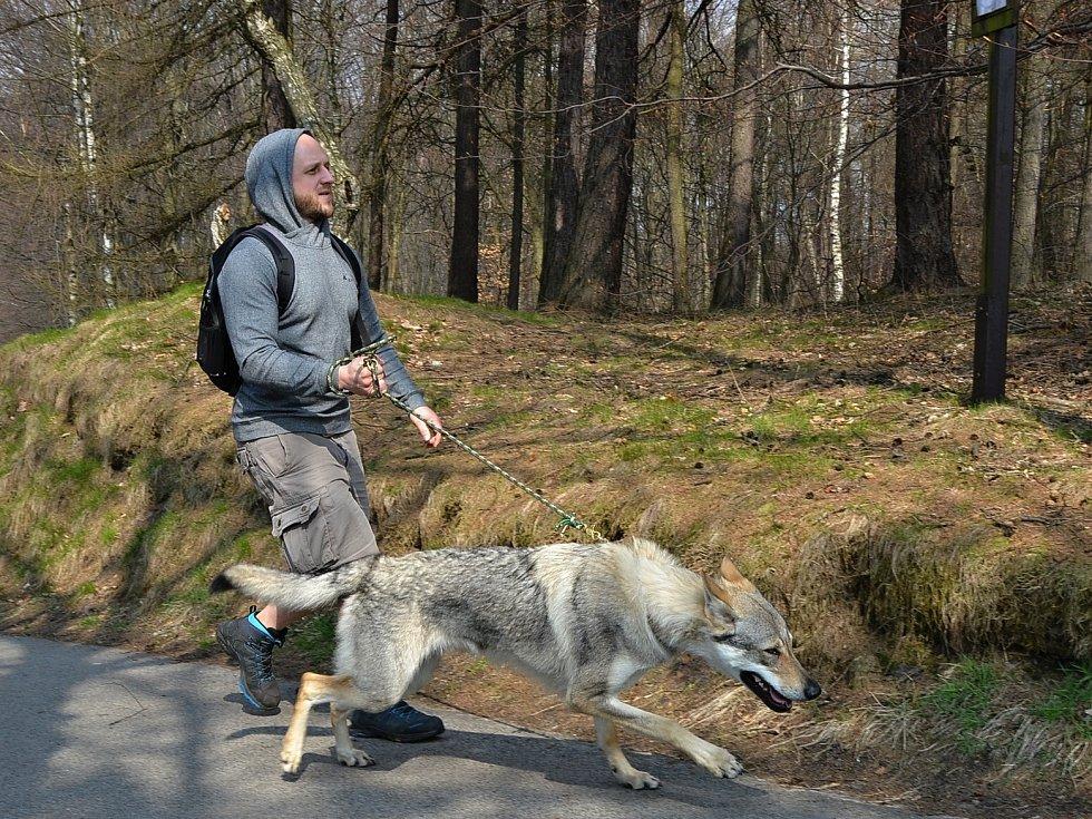 V Tisé pokračoval běžecký seriál Český kros 2019 závodem psovodů