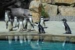 Tučňáci v ústecké zoologické zahradě