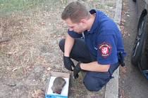 O zraněného ježka se postarali strážníci.