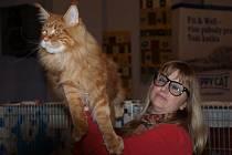 Dvoudenní výstava koček se konala v ústeckém Domě kultury.
