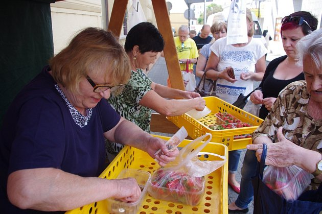 Svádovské jahody se prodávají na Mírovém náměstí a uHraničáře.