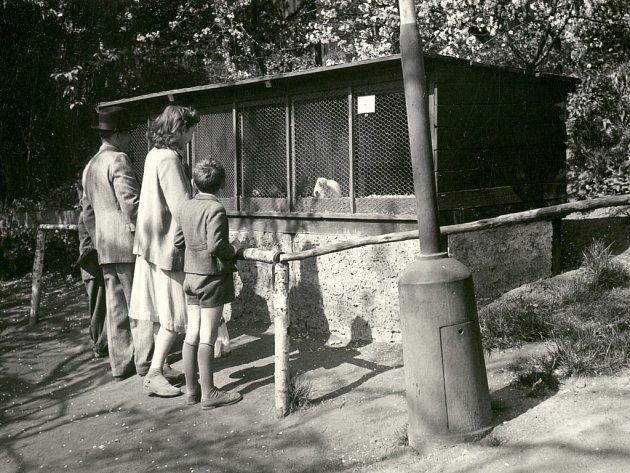 Ústecká zoo v padesátých letech 20. století.
