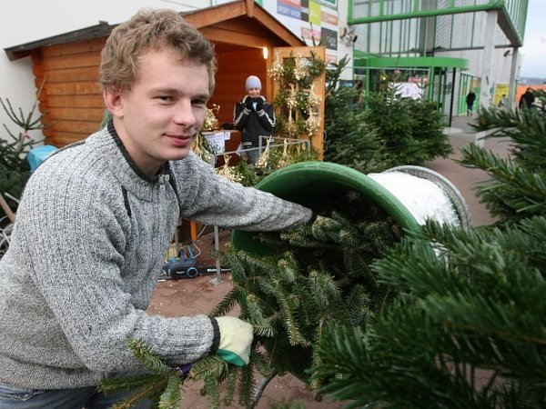 Prodej stromků uGlobusu.