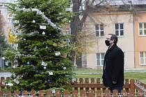 Rektor Balej rozsvítil Vánoční strom UJEP.