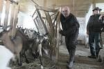 Fotoreportér Deníku pracoval na soukromé kozí farmě Nová Víska u Dolní Poustevny na Děčínsku v rámci reportáže Na vlastní kůži. Na starost měl třicet koz, dojil je a krmil.