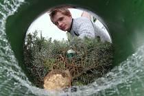 Adventem začal prodej vánočních stromků na Ústecku.