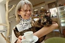 První kočičí kavárna v Ústí a Marta Chrudimská