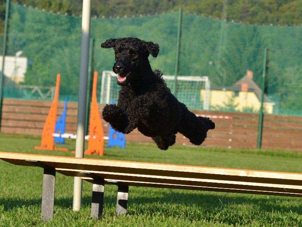 Dana Russová a psí agility.
