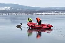 Chabařovičtí strážníci zachraňovali srnce z ledu