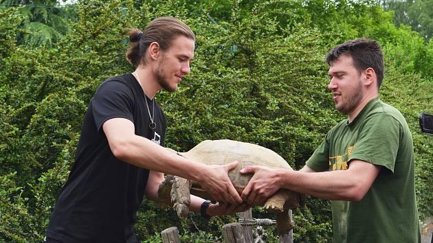 Ze zimoviště do letního výběhu se v ústecké zoologické zahradě stěhovaly už také želvy ostruhaté