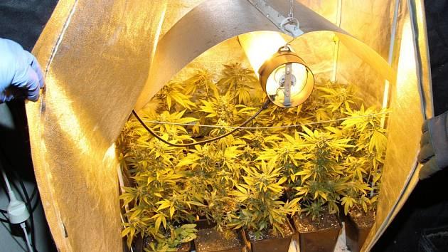 Policisté odhalili v rodinném domku v Zašové pěstírnu marihuany.