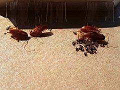 Z ubytovny Modrá lezou švábi a štěnice
