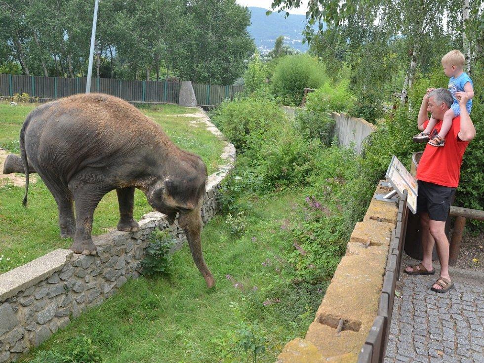 Kala a Delhi předvedly návštěvníkům zoologické zahrady skvělou show, bavili se malí i velcí.