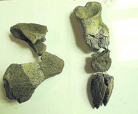 V NÁRODNÍM MUZEU jsme jako 1. v ČR vyfotografovali kosterní fragmenty schizotheria, které zapůjčil na výstavu Příběh planety Země Zdeněk Dvořák. Snímek 1. prstní články, 2. různé kosti s klouby, 3. dvě velikosti prstů ukončených dvojitými drápy, 4. jednot