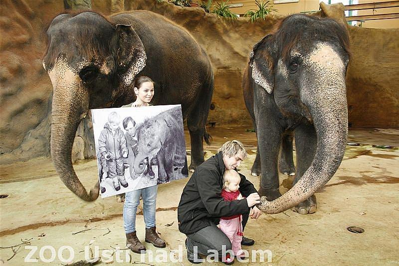 Slony Ústí chová už 25 let. Včera slavila slonice Kala a Delhi obřím dortem.