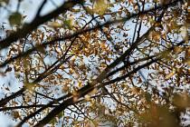 Ilustrační snímek. Uschlé stromy