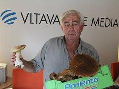Šest kilo zdravých hub našel houbař z Neštěmic u Rýdeče.