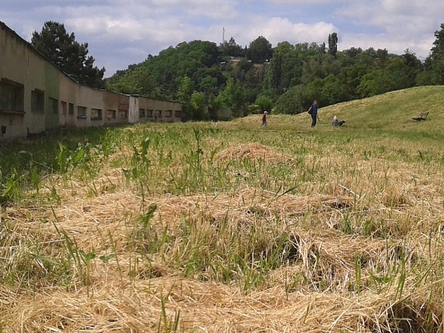 V ulici V Kutišti vysokou trávu v sousedství paneláků nemají, ale tu posekanou dosud nikdo neodvezl.