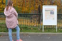 Zoologická zahrada připravila na prázdniny 23. ročník speciálního soutěžního kvízu Stezkami zoo.