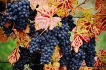 Slavnosti vína a burčáku budou v pátek na Lidickém náměstí v Ústí nad Labem.