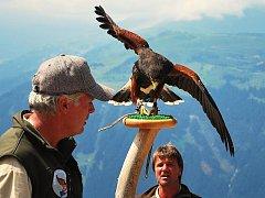 Show dravých ptáků v tyrolském Mayrhofenu.