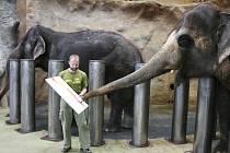 Celkem dvanáct obrazů vytvořili orangutani Ňuninka a Ňuňák, společně se slonicemi Kalou a Delhi. Vernisáž budou mít 3. června v ústeckém muzeu. Do té doby mohou fanoušci zoo vymyslet názvy obrazů.