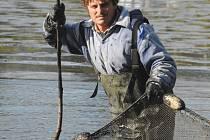 Rybář při výlovu rybníku