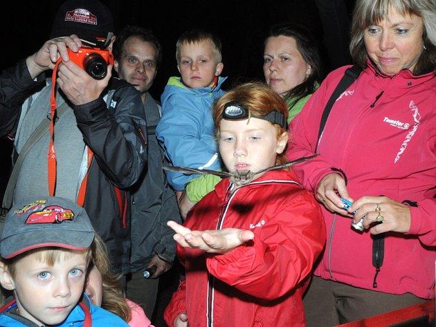 Během Mezinárodní noci pro netopýry vPanském lomu před Hanychovskou jeskyní dostanou účastníci akce možnost vypustit menší druhy těchto zvířat zpět na svobodu.