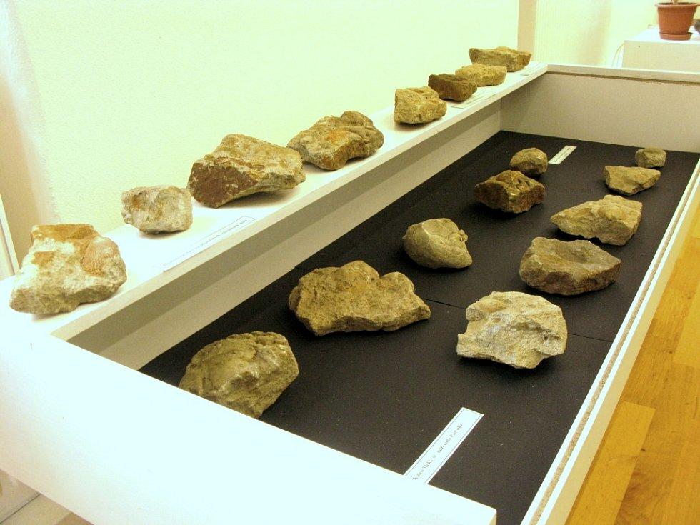 Z vitrín si zkameněliny můžete vyndat a osahat si je.
