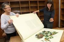 Faksimile, knihy s podpisem autorů, staré tisky, umělecké knihy. To jsou poklady, které běžně nenajdete ve výpůjčních regálech.