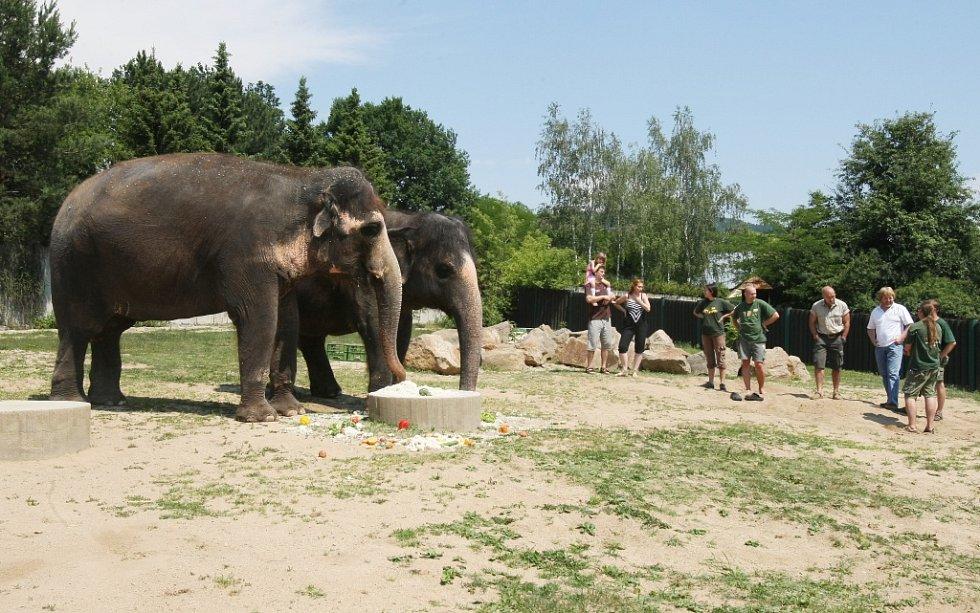 Už pětadvacet let se může Ústí chlubit slonicí Delhi.