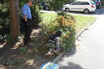 V ulici Jizerská ležel v křoví podnapilý muž, který díky své opilosti nebyl schopen pohybu.