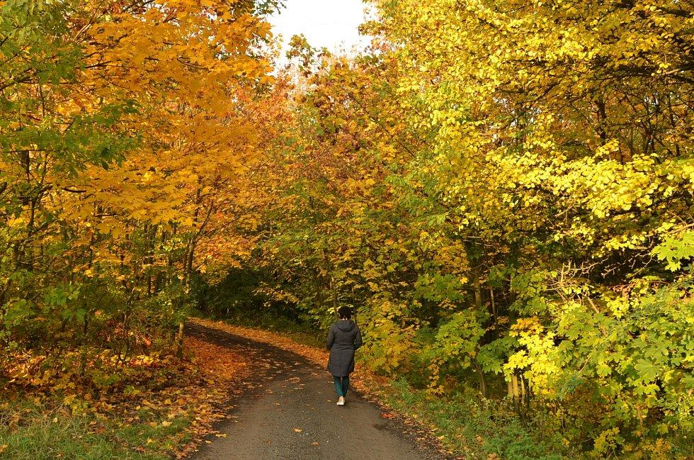 Podzimní barvy léčí, uklidňují a inspirují unavené Ústečany.