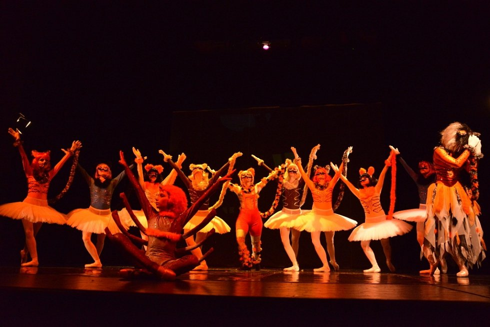 Světovou premiéru baletu Kočičiny chystá na sobotu 24. listopadu od 17.00 severočeské Baletní studio Regina.