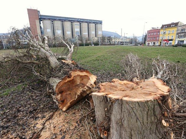 Stromy na Střekově padly k zemi asi nelegálně.