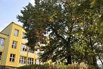 Strom Svobody škola vysadila 25. října 1968.