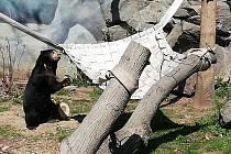 Výběh medvědů malajských má nové kmeny a herní prvky.