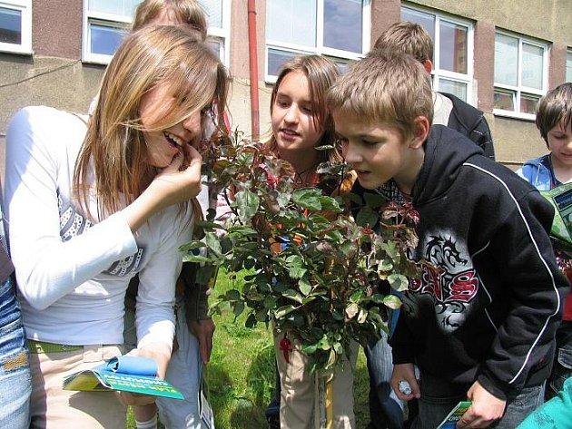 RŮŽE PRO zemřelou paní učitelku vypěstovali žáci základní školy v Chomutově. Keřík do finále postoupit nemohl, protože nesplňoval kritéria soutěže Strom roku. Porota mu však udělila zvláštní ocenění.