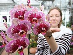 Zdarma je vstup na prodejní výstavu orchidejí, kterou lze dnes i zítra navštívit v novém skleníku Přírodovědecké fakulty Univerzity J. E. Purkyně v Předlicích.
