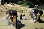 Slonice Delhi (vlevo) a Kala si společně s chovatelem Pavlem Kökertem užívají koupel.