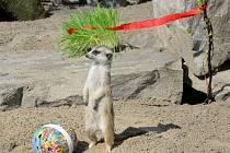 Velikonoce v ústecké zoo.
