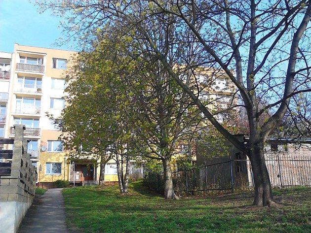 Navrtané stromy v Hornické ulici jsou zelené. Alespoň zatím.