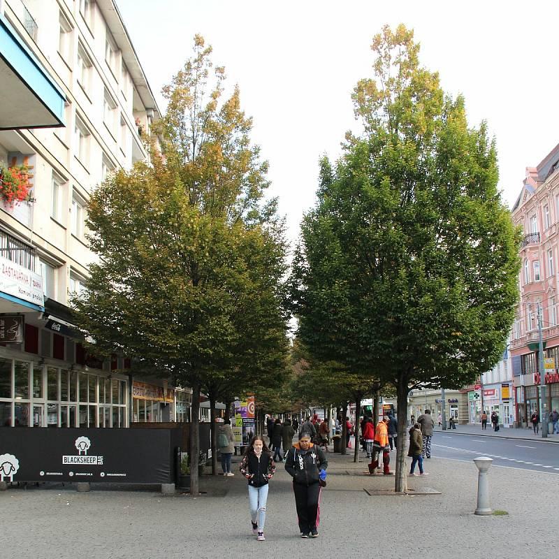 Stromořadí v ústecké Hrnčířské ulici umírá