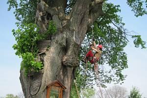Staré stromy mají šanci na bezplatné ošetření.