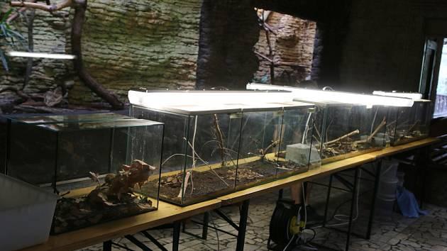 Den hmyzu a jiné havěti v ústecké zoo