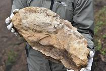 Fosilní nález z Tisé.